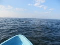 Bootstour vor Mazunte