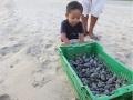 Babyschildkröten am Playa Ventanilla